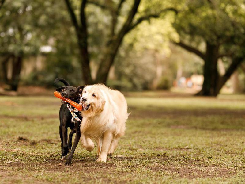 Socialize Your Pup