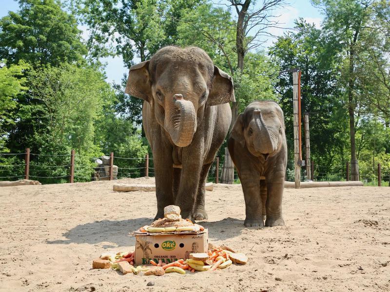 Elephants at Pairi Daiza