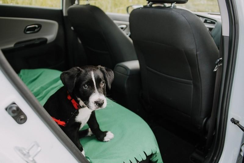 fear of car rides
