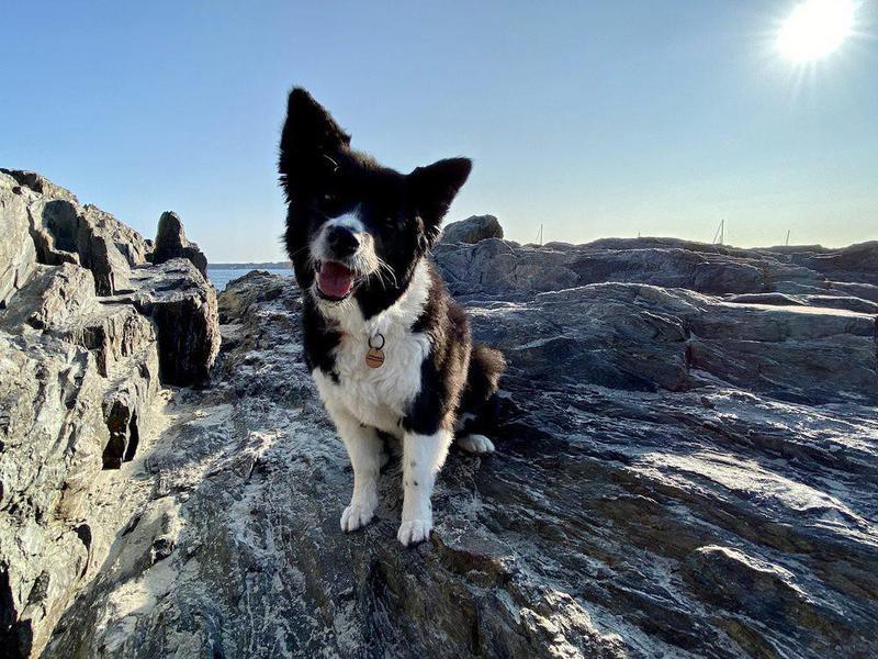 Happy dog at Willard dog beach