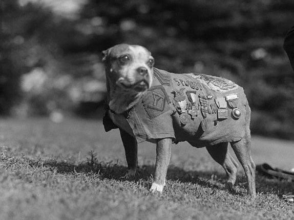 Sergeant Stubby, decorated World War I war dog