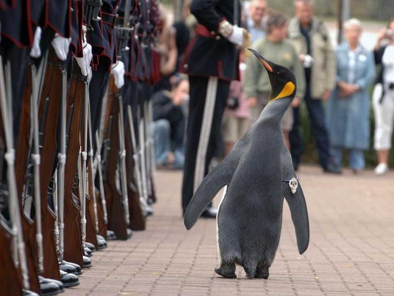 Nils Olav Inspects the King's Guard