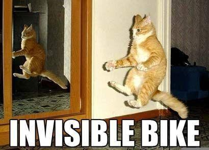 Cat riding an invisible bike