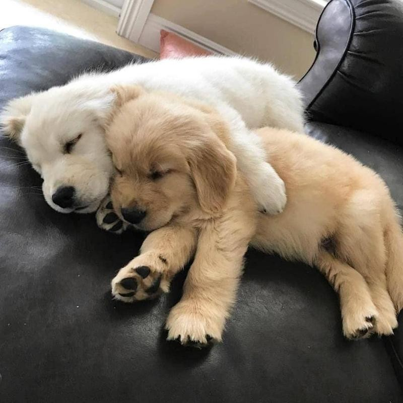 cute puppy cuddles