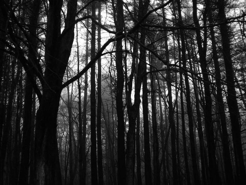 Wood Devils