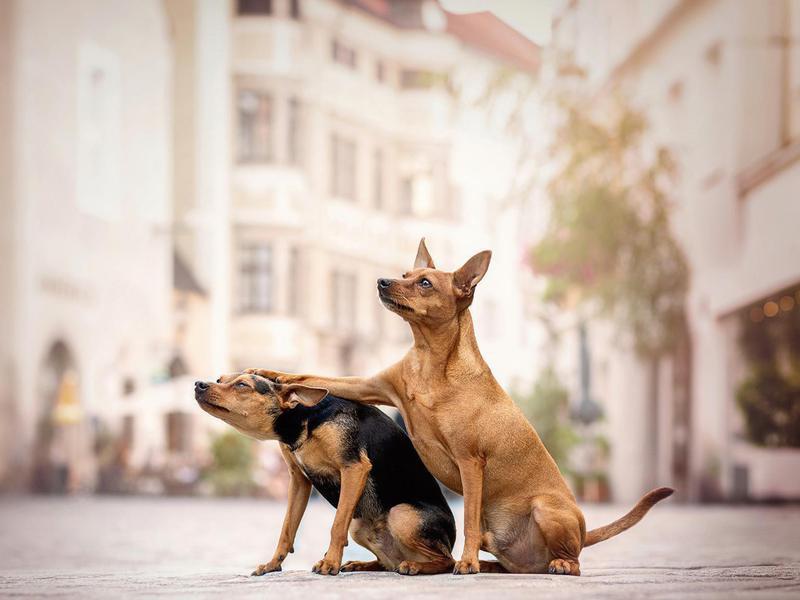 dog patting dog
