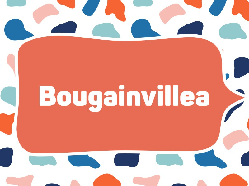 2019: Bougainvillea (Tie)
