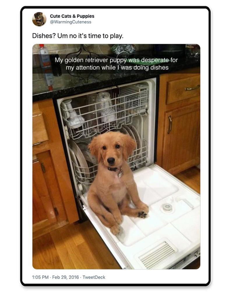 Dog on a dishwasher