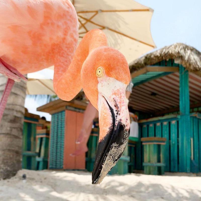 Flamingo photobomb