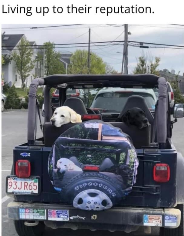 Dog riding in Jeep