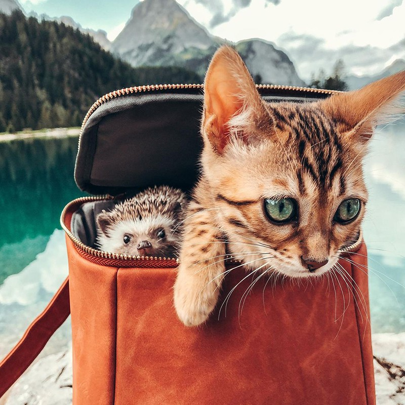 Hedgehog and cat in mountains