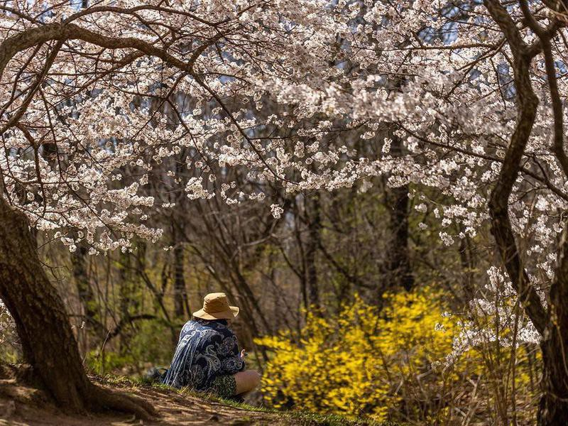 Woman sitting in Central Park
