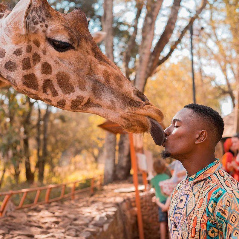 Fahad Fuad kissing giraffe
