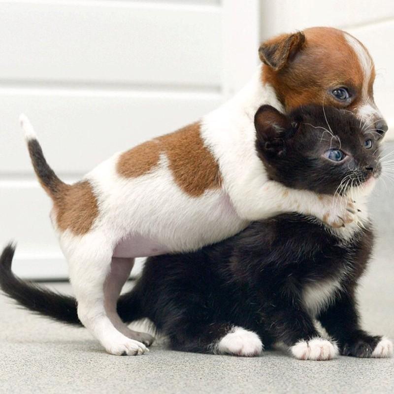 Puppy hugging kitten