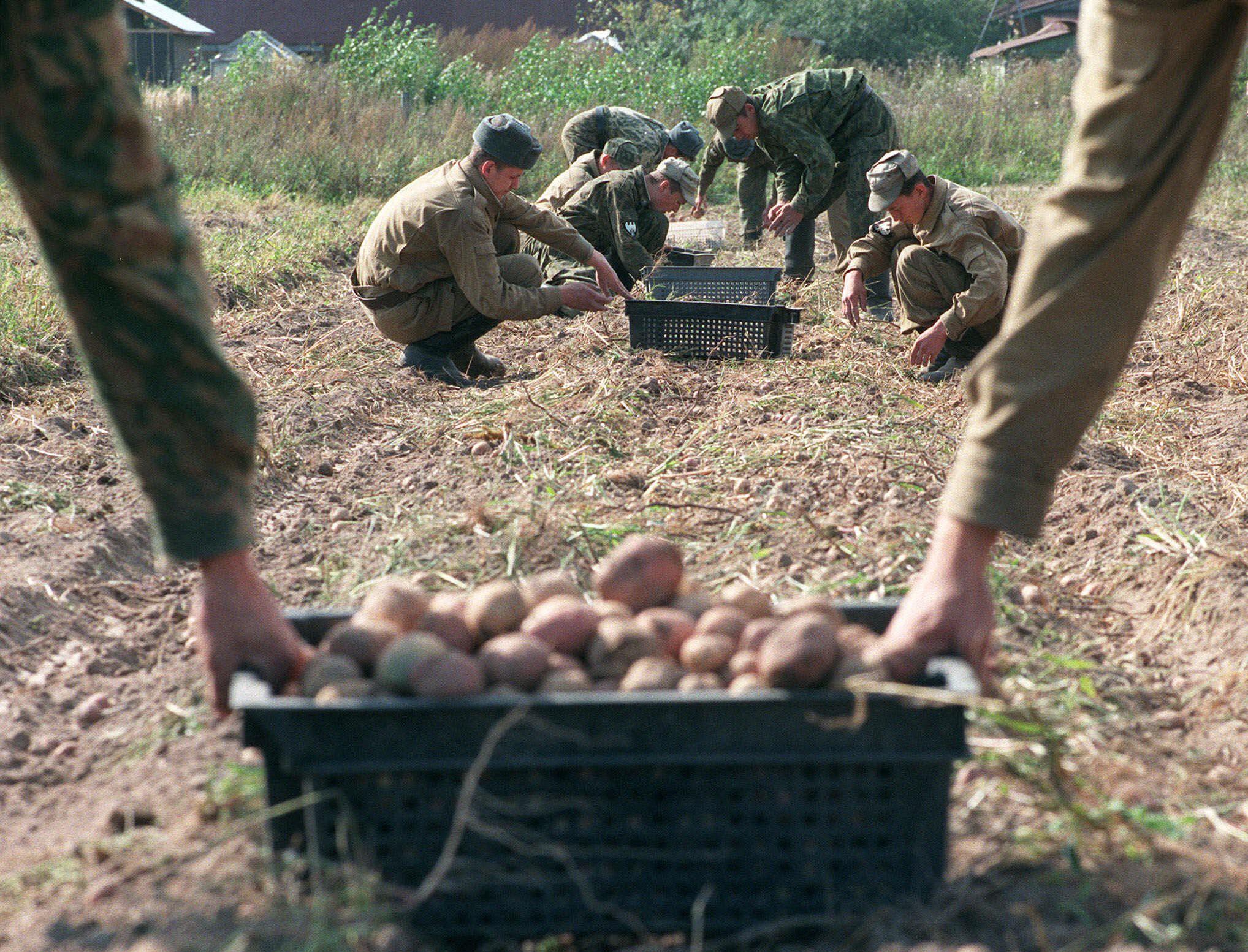 Potatoes in Russia