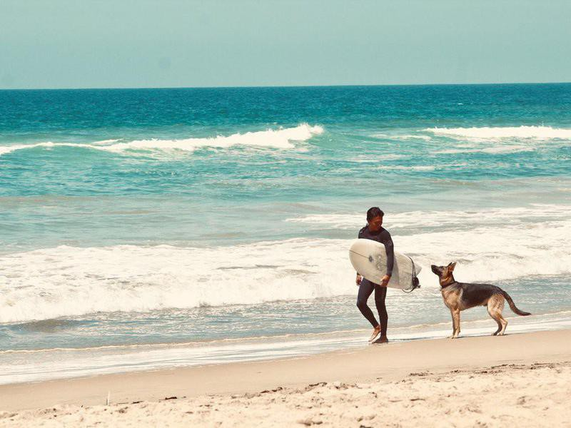 Dog visiting a surfer on a dog beach