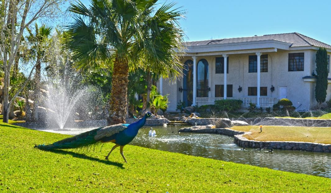 Peacocks on Wayne Newton's property