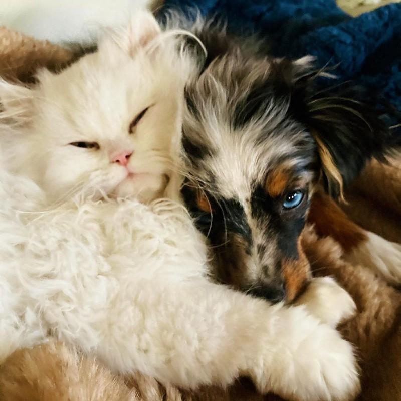 Cat and dachshund