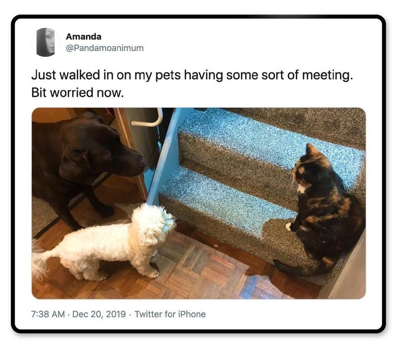 The cat's definitely the boss.