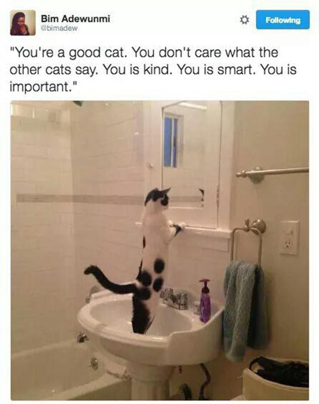 Cat affirmation in the mirror