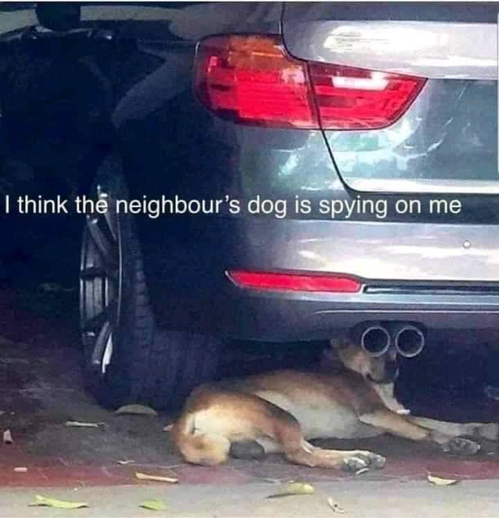 Dog spy