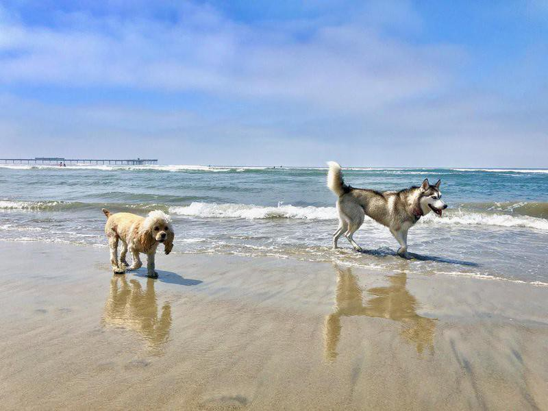 Two dogs playing in the water at beach