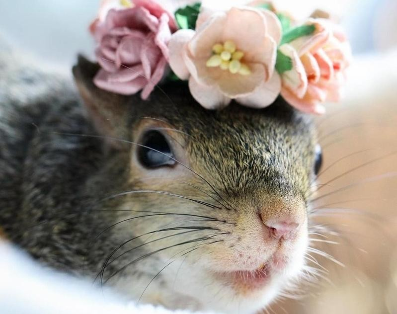 Squirrel with flowers