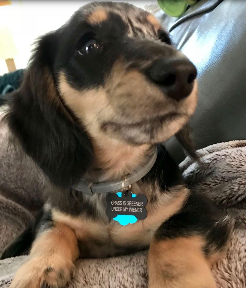 Cute dog has a surprise