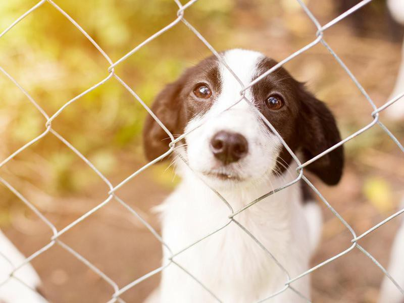 All Rescue Dogs Are Damaged