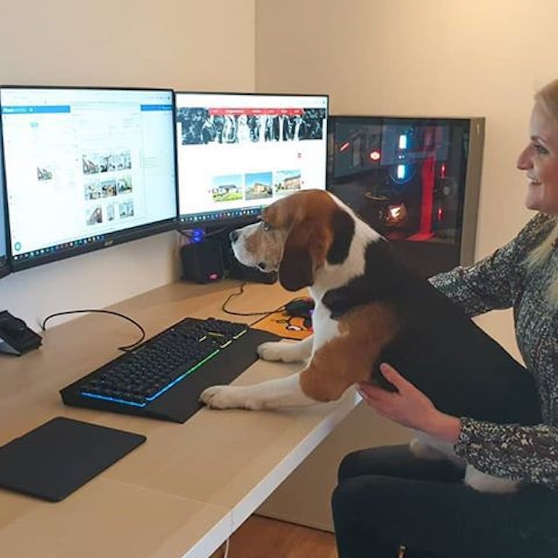 Dog learning computers
