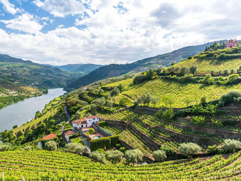 Vineyards of the Douro Valley in Portugal