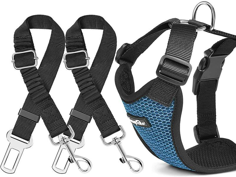 Blue dog harness with two dog seat belts