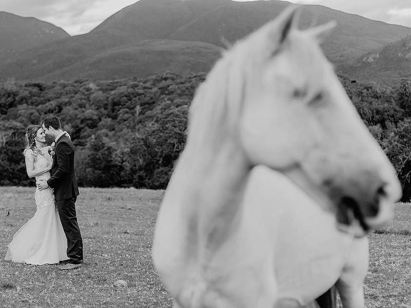 Horse photobombing wedding shoot