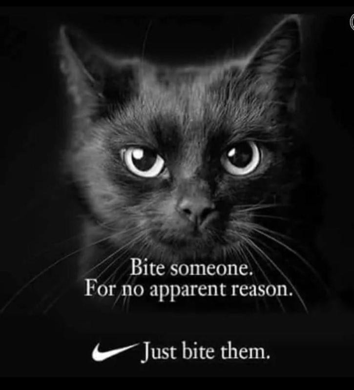 Cat wants to bite someone