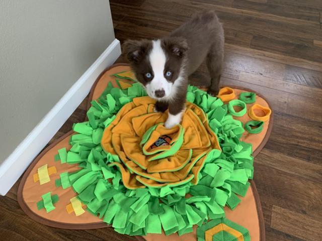 Awoof Snuffle Mat Pet Dog Feeding Mat