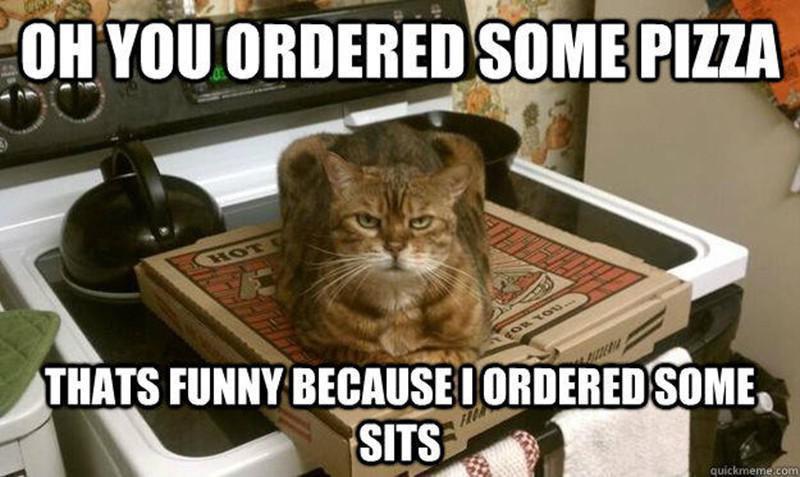 Cat likes pizza