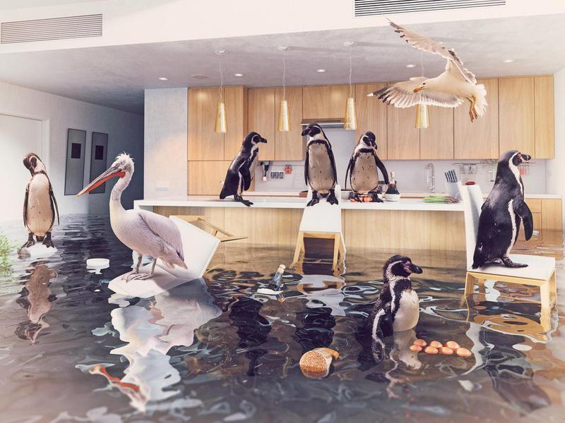 Birds in a flooded kitchen