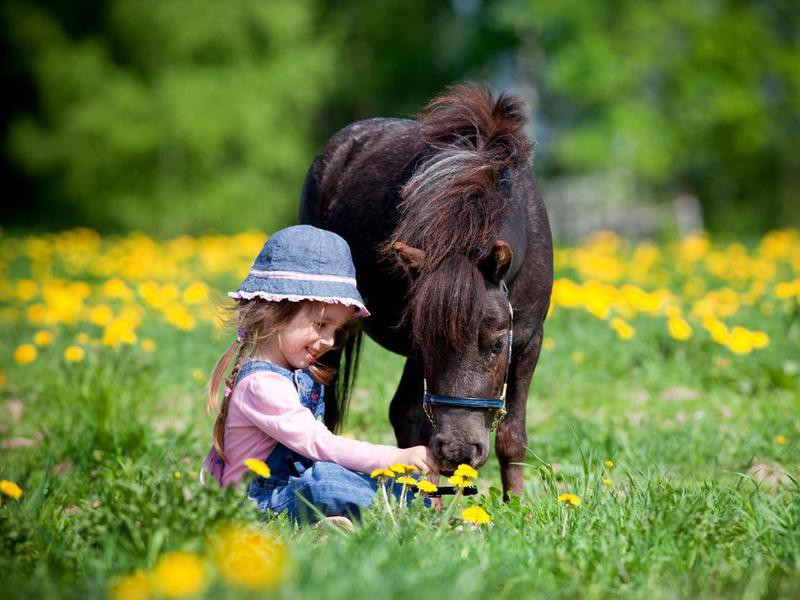 Child and miniature horse in field