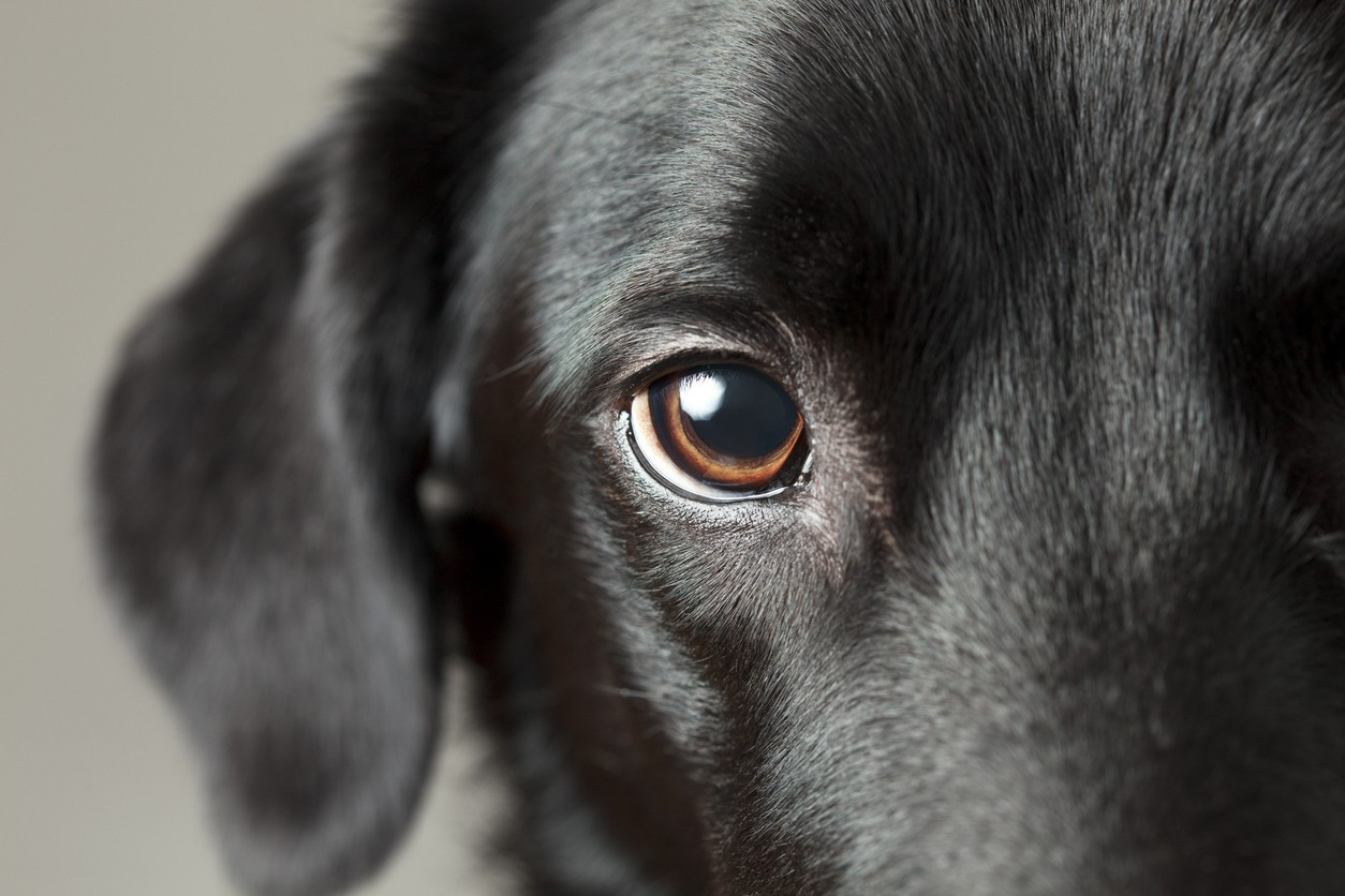 25 Common Dog Myths That Just Aren't True