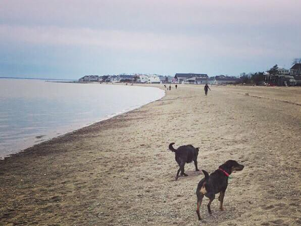 Dogs at Jennings Dog Beach
