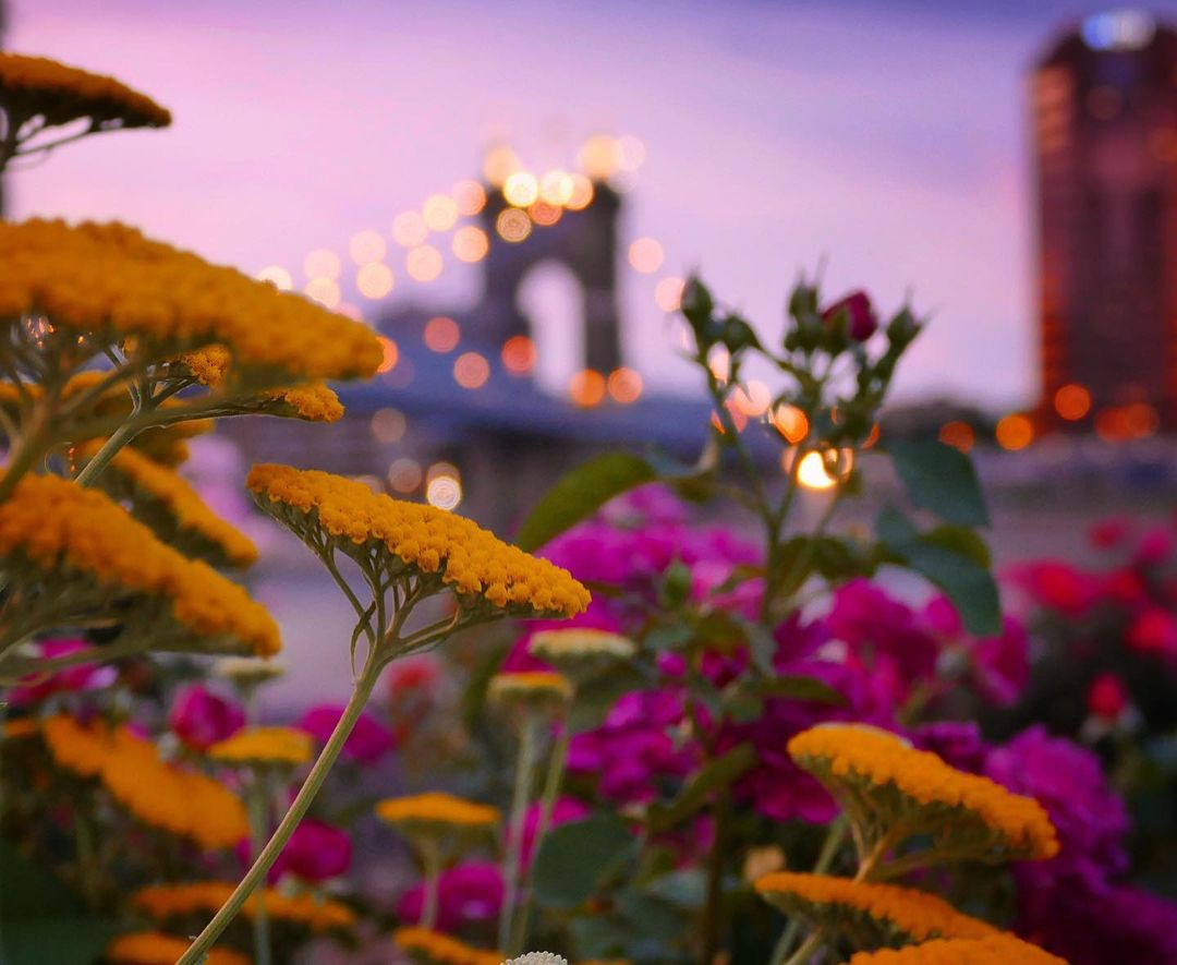 Flowers at Riverfront Park