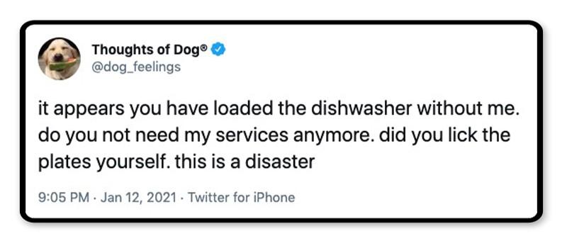 Dog dishwashing thoughts