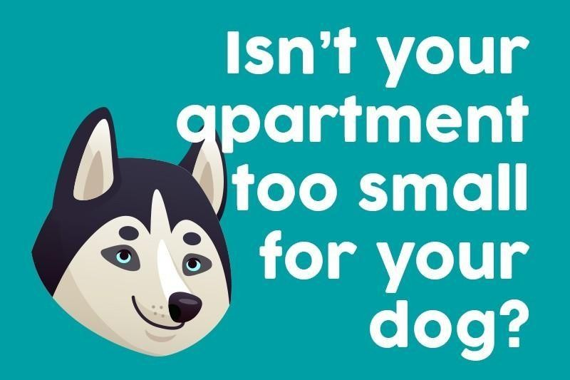 Isn't your apartment too small for your dog?