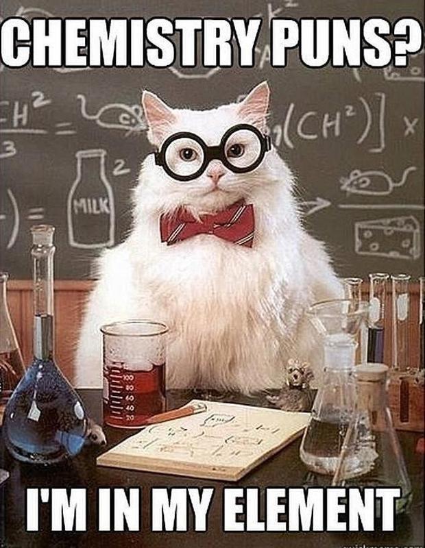 Cat chemistry teacher