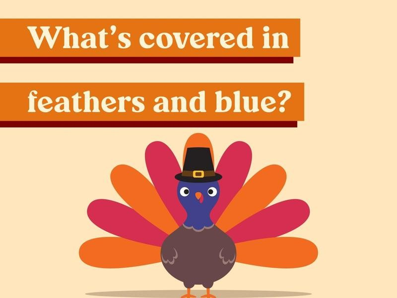 What's covered in feathers and blue?