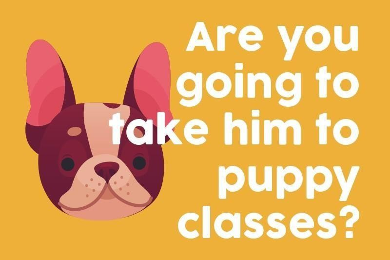 Are you going to take him to puppy classes?