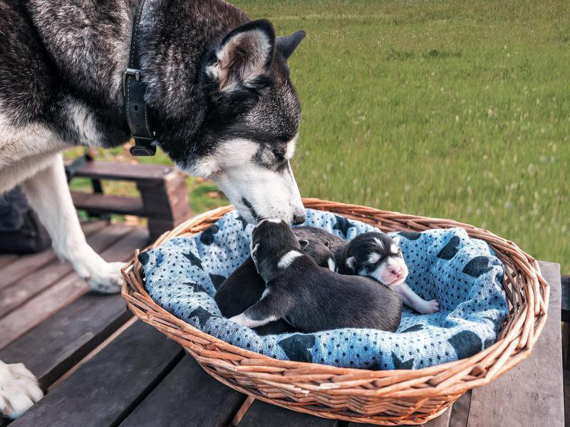 A Female Dog Feels 'Empty' If She Doesn't Have a Litter