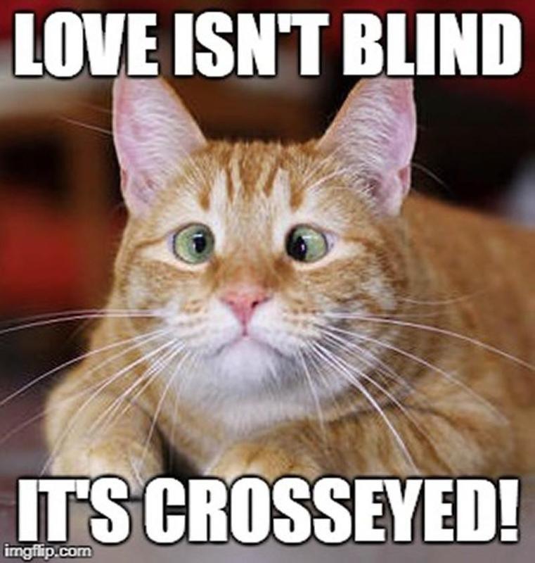 crosseyed cat