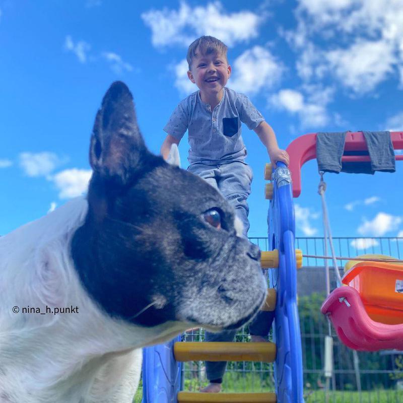Pug photobombing kids in a playground