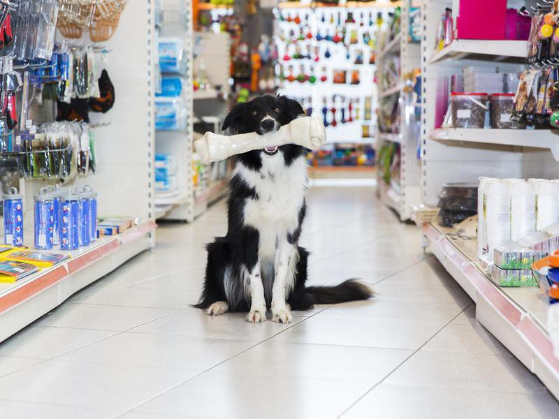 If a Store Doesn't Allow Pets, You Don't Waste Your Time